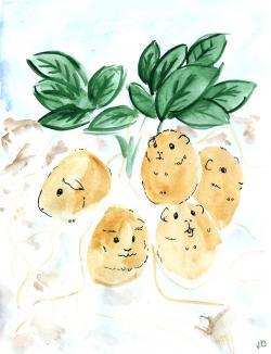 Drawn guinea pig potato
