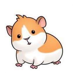 Hamster clipart guinea pig