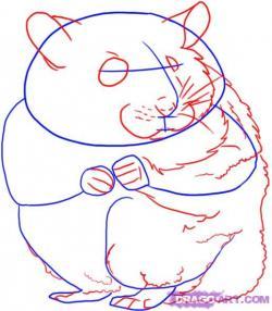 Drawn hamster dragoart