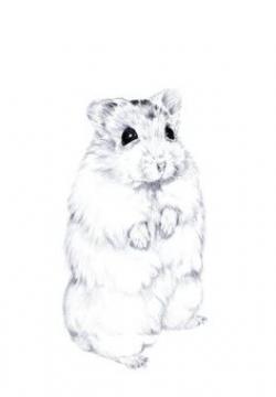 Drawn hamster draw a