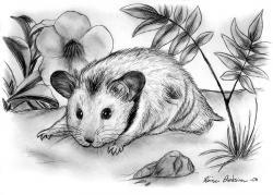 Drawn hamster sketch