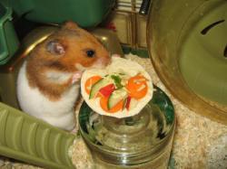Drawn hamster vegetable