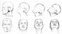 Drawn head human head anatomy