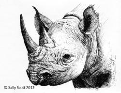 Drawn rhino sketch