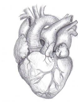 Drawn hearts draw