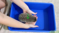 Drawn hedgehog bathtub