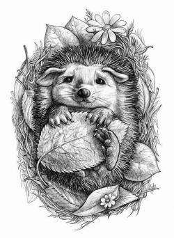 Drawn hedgehog black and white