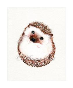 Drawn hedgehog illustration