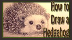 Drawn hedgehog realistic