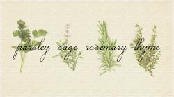 Drawn herbs parsley sage rosemary and thyme