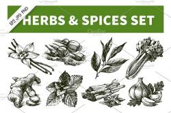 Drawn herbs sketch