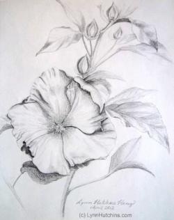 Drawn hibiscus