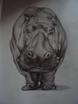 Drawn hippo sketch