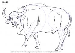 Drawn horns gaur