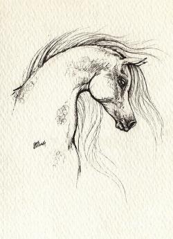 Drawn horse arab horse