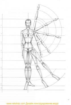 Drawn model proportion