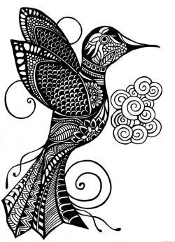 Drawn hummingbird doodle