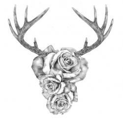 Drawn horns dark
