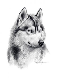 Drawn head husky