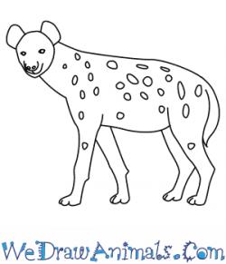 Drawn hyena