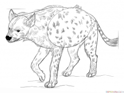Drawn hyena spotted hyena