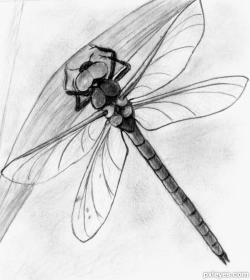 Drawn dragonfly insect art