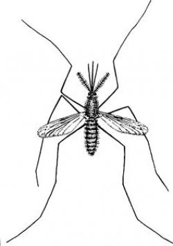 Drawn mosquito insect art