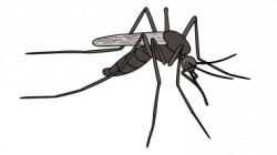 Drawn mosquito ant