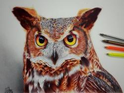Drawn owlet realistic