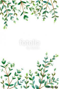 Eucalyptus clipart border
