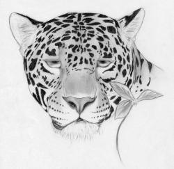 Drawn jaguar jaguar head