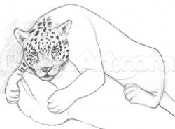Drawn jaguar rainforest animal