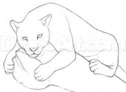Drawn jaguar sketch