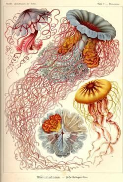 Drawn jellies art nouveau