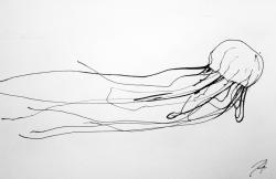 Drawn jellies box jellyfish