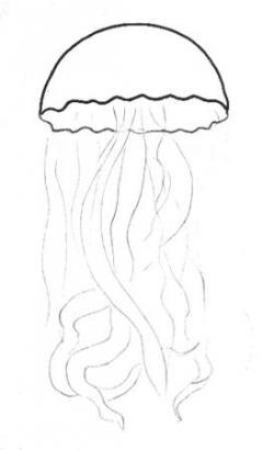 Drawn jellies draw a