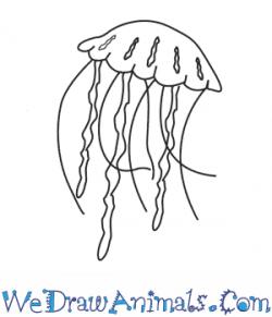Drawn jellies high resolution