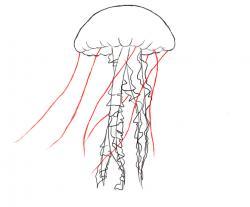 Drawn tentacle simple