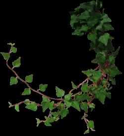Drawn ivy jungle foliage