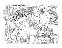 Drawn rainforest rainforest ecosystem