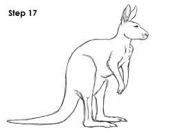 Drawn kangaroo sketch