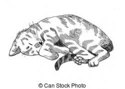 Tabby Cat clipart cat nap