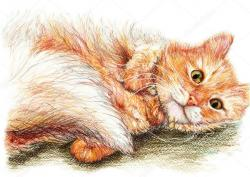 Drawn kitten fluffy cat
