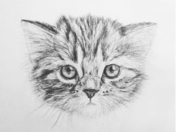Drawn kitten
