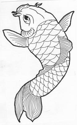 Drawn koi carp line drawing
