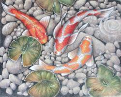 Drawn koi fish pond drawing