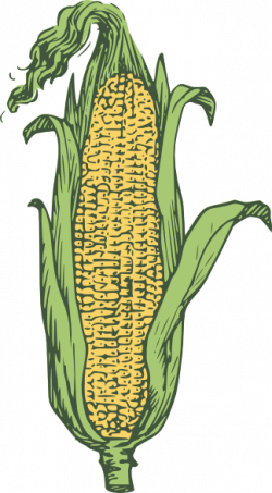 Drawn korn ear corn
