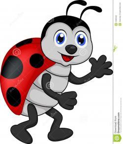 Drawn ladybug cartoon