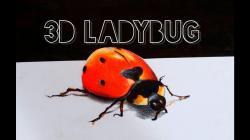 Drawn ladybug