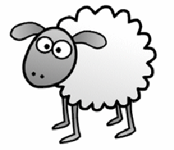 Drawn sheep